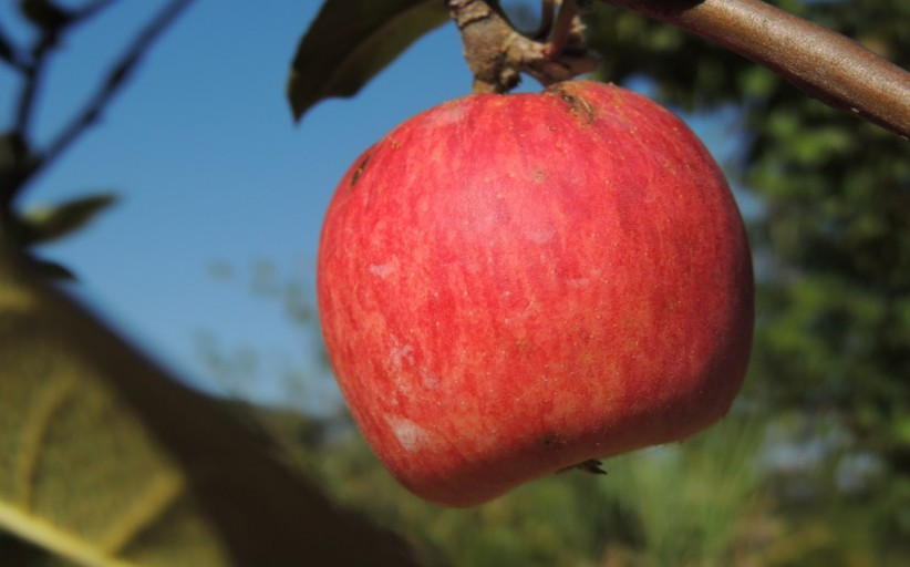 Uma maçã para várias ideias